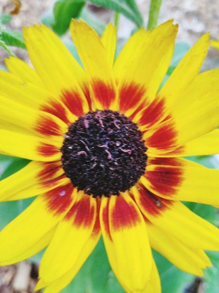 Flower Flower Beauty In Nature Blossom