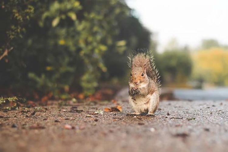 Animal Themes One Animal Animal Animals In The Wild Animal Wildlife No People Squioutdoors Nature Surface Level Full Length Day Mammal Close-up Hedgehog Squirrel