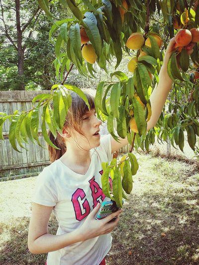 Outside Summer Peaches Peach Tree Leaves Girl Youth Picking Fruit Day Teenager Cellphone Young Women Women Close-up Blooming Growing Plant Life In Bloom