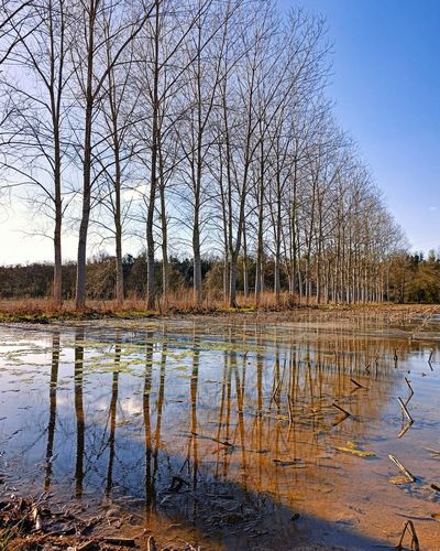Bare trees by lake against sky