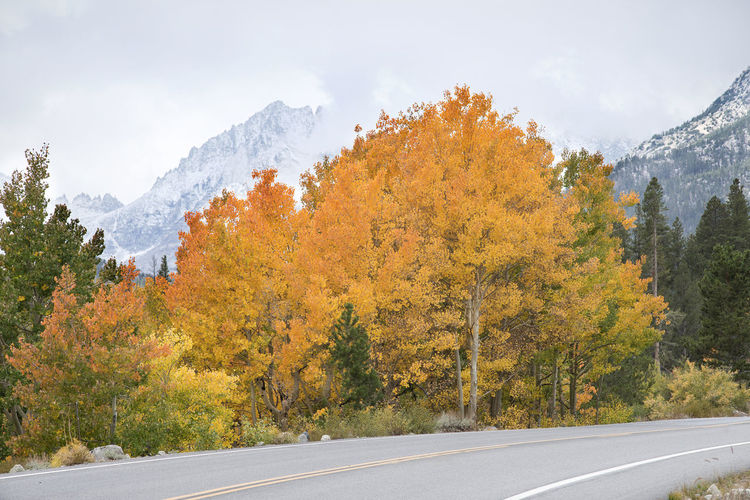 Autumn landscape Tree Autumn Transportation Road Beauty In Nature Nature No People Mountain Day Scenics - Nature Sky Tranquil Scene Autumn Collection Outdoors Eastern Sierras, CA Rock Creek Canyon Aspen Trees