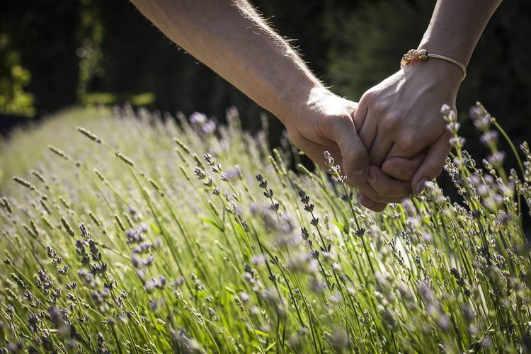 Woman Couple Couple - Relationship Hands Holding Hands Holdinghands Pair Significant Other Love Emotion Emotions Lavender Lavenderflower Lavender Colored Low Angle View Relationship Relationship Fiance Engagement Engagement Photography Boy And Girl Man And Woman Girlfriend Boyfriend Human Hand Flower Men Agriculture Rural Scene Close-up