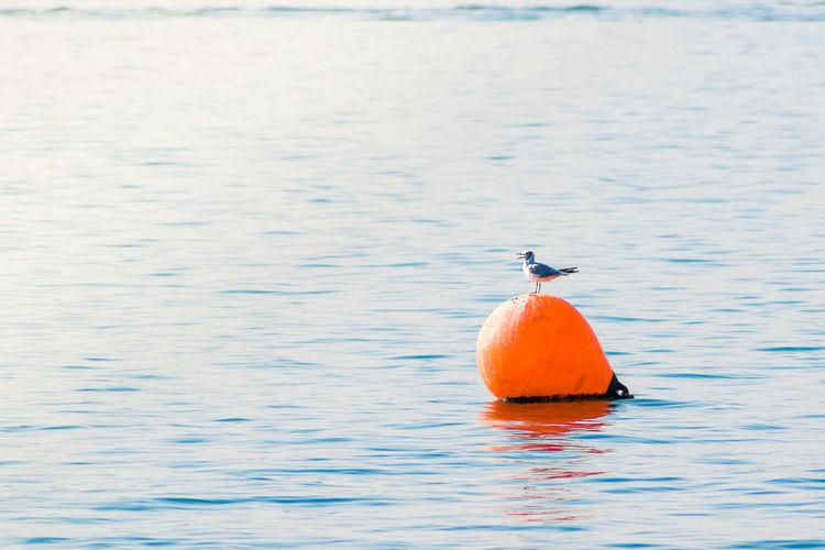 Bird in a sea