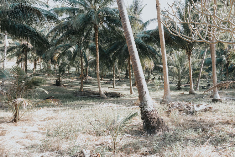 Scenic view of palm trees on land