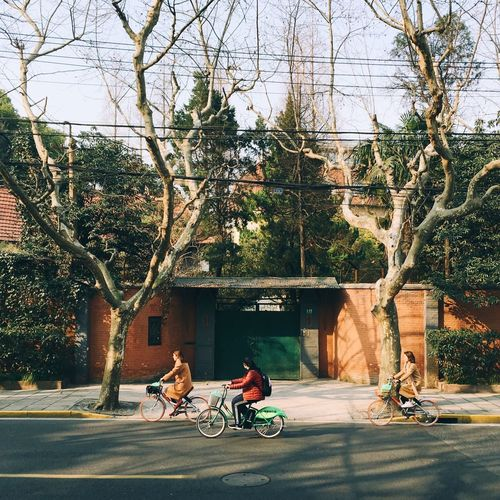 Asian Winter biking on the street ASIA Shanghai Shadow Tree Winter Sunshine Bicycle Students Girls Tree Bicycle City Transportation City Life Outdoors Architecture Building Exterior Real People Women Day Built Structure People Nature Bare Tree Adults Only Adult Sky