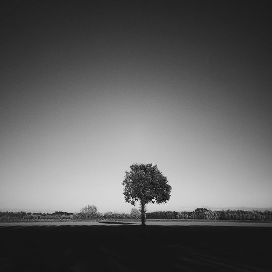 1927 Tree Lone Landscape Isolated Tranquility Field Tranquil Scene Nature Bare Tree Beauty In Nature Clear Sky Outdoors Day Tree Trunk Scenics No People Sky Minimalism Streetphotography EyeEmNewHere Monochrome Blackandwhite Thegreatoutdoors-2017EyEmawards Lost In The Landscape