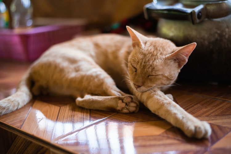 Close-up of cat sleeping on kitchen counter