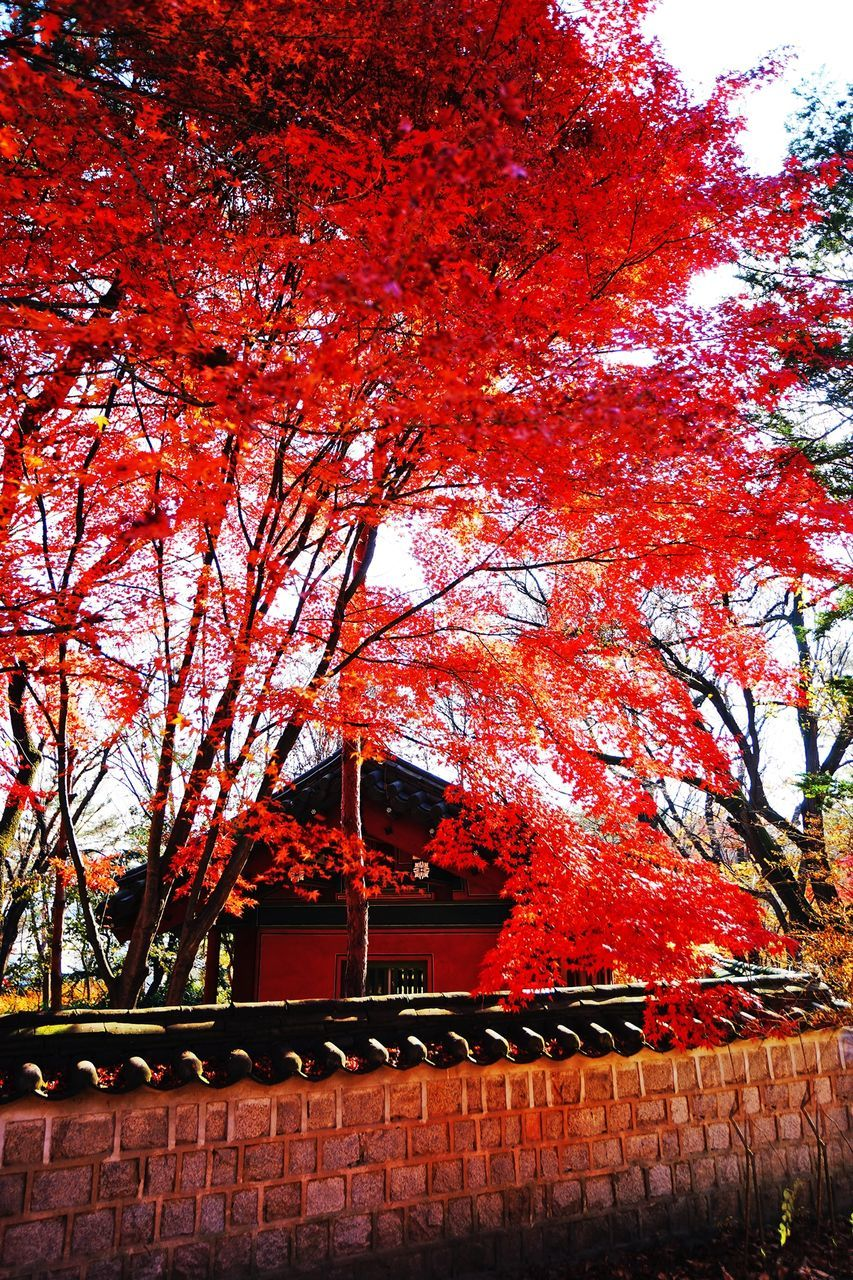 tree, autumn, architecture, branch, change, building exterior, built structure, no people, outdoors, day, beauty in nature, growth, nature, leaf, low angle view, red, sky