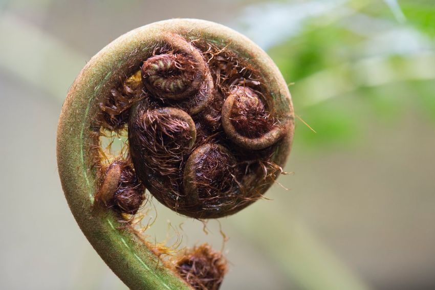Fibonacci Fern New Close-up Focus On Foreground Plant Nature New Life No People Growth Fragility Freshness Beauty In Nature Day