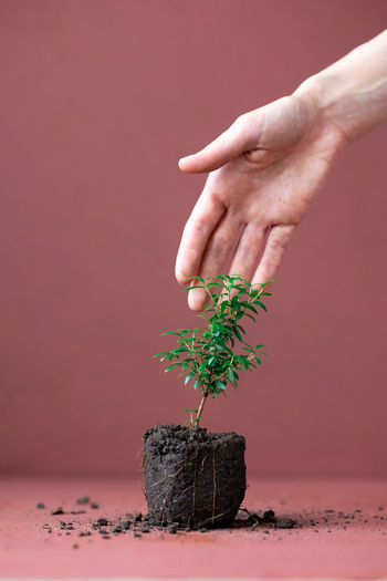 Close-up of hand holding small plant on table