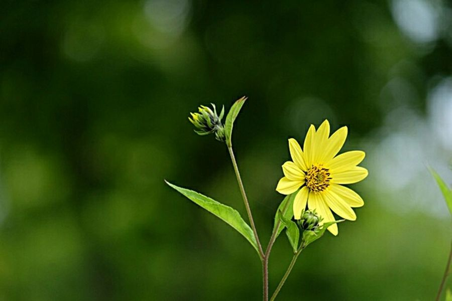 散歩日和 Flower Yellow Beauty In Nature Close-up Outdoors No People From My Point Of View ヒカリ