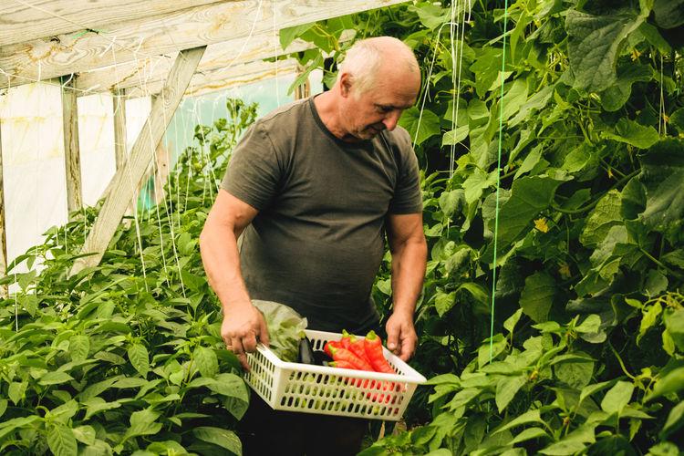 Full length of man holding fresh homegrown vegetables in basket