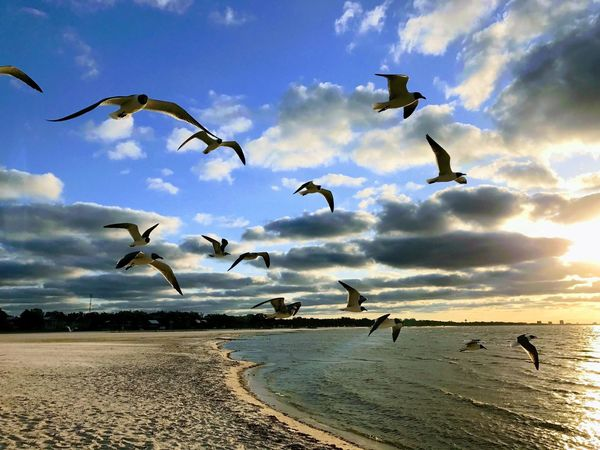 From My Point Of View Landscapes Flying Mid-air Nature Sea Bird Animal Themes Sky Animals In The Wild Spread Wings Large Group Of Animals Cloud - Sky Beach Motion Flock Of Birds Water Outdoors Beauty In Nature No People Seagull Day EyeEm Nature Lover EyeEmNewHere Let's Go. Together.