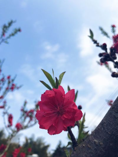 Flower Growth Petal Fragility Sky Nature Beauty In Nature Plant Blooming Freshness Flower Head Outdoors Day Close-up EyeEmNewHere