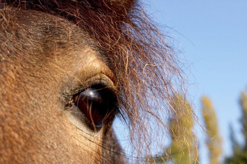 Maximum Closeness Horse Horse Eye Animals One Animal Domestic Animals Animal Themes Mammal Close-up Outdoors Sky Animal Eye Brown Animal Body Part No People Day Nature