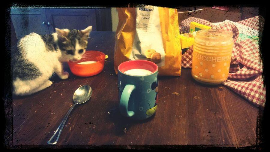 Facciamo colazione insieme. Romeo First Eyeem Photo