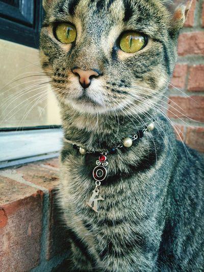 Kitty Kollar! Ksimonejewelry Cat Collar Handmade By Me