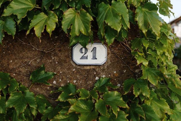 Adress Number Numbers Number 21 21 Door House Home France Plant No People Day Green Color Growth Nature Leaf Communication Wall - Building Feature Ivy Tree Plant Part Outdoors Backgrounds Background Texture Pattern Graphic Sign