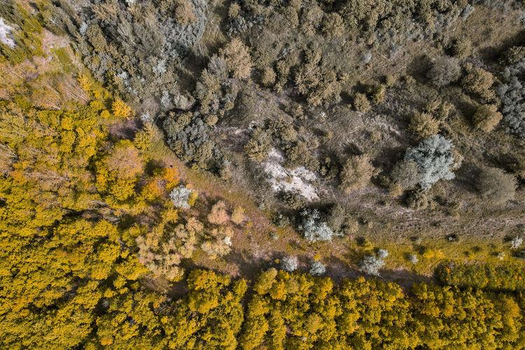 Full frame shot of yellow rock