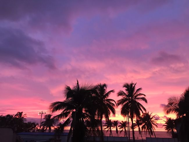 Just beautiful 😍 Palm Tree Tree Sunset Silhouette Beach Tranquility Sky Beauty In Nature Outdoors Scenics No People City Nature Colombia Art Cartagena, Colombia Beautiful Dramatic Sky Pink Sky EyeEmNewHere Breathing Space The Week On EyeEm