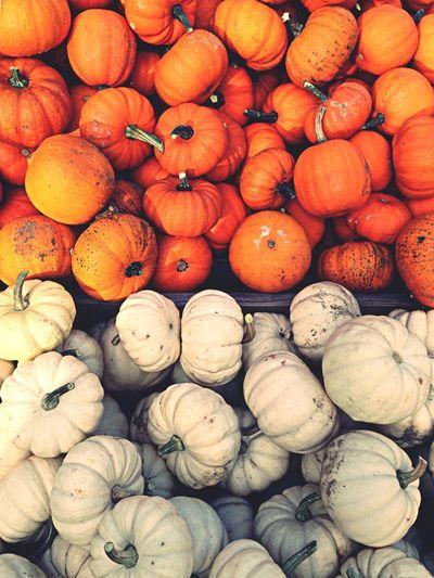 Pumpkins Festival Berlin Fall