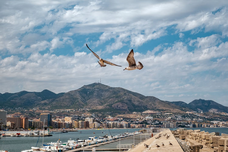 Seagulls Flying Over Harbor In City Against Cloudy Sky
