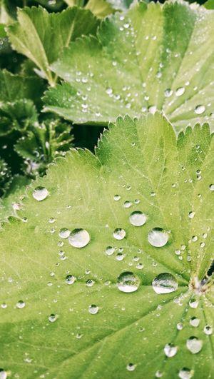 Full frame shot of wet plants