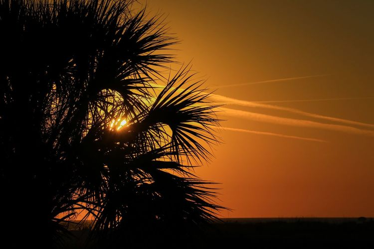 Sky Sunset Plant Palm Tree Tree Silhouette Tropical Climate Nature Beauty In Nature No People Tranquility Sun Scenics - Nature Back Lit Sunlight Orange Color Tranquil Scene Leaf Date Palm Tree Palm Leaf Outdoors Tropical Tree Bright Coconut Palm Tree