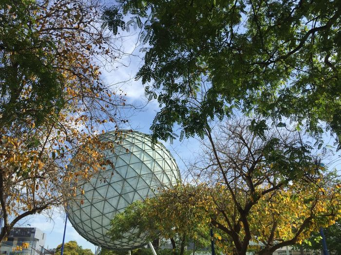 Tree Plant Branch Nature Low Angle View No People Sky Day Growth Sphere Green Color Outdoors Sunlight Architecture Building Exterior Tranquility Leaf Park The Architect - 2019 EyeEm Awards