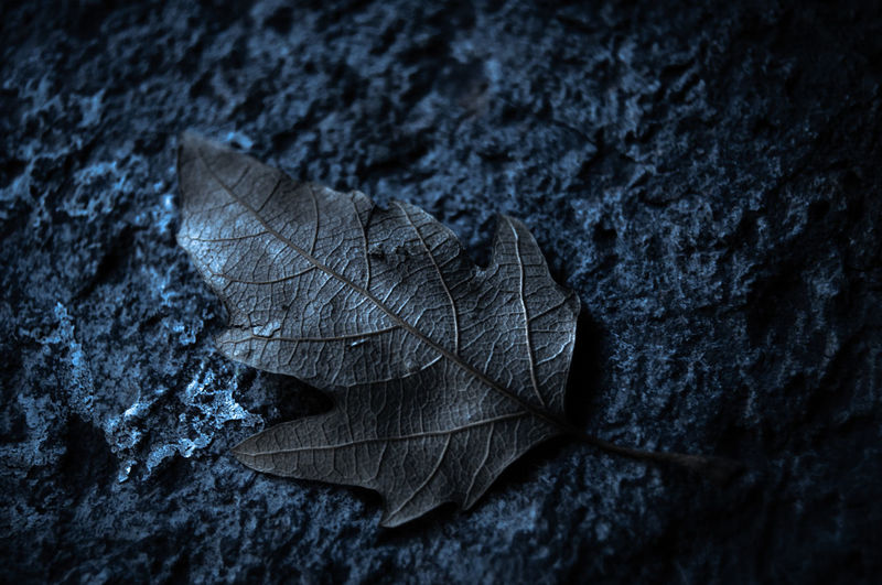 Close-up of dried autumn leaves on wood
