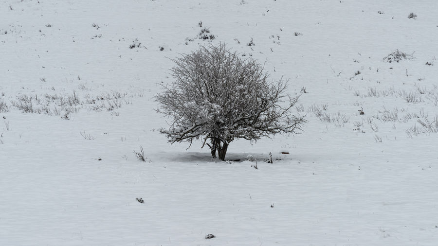 Trees on snow covered land