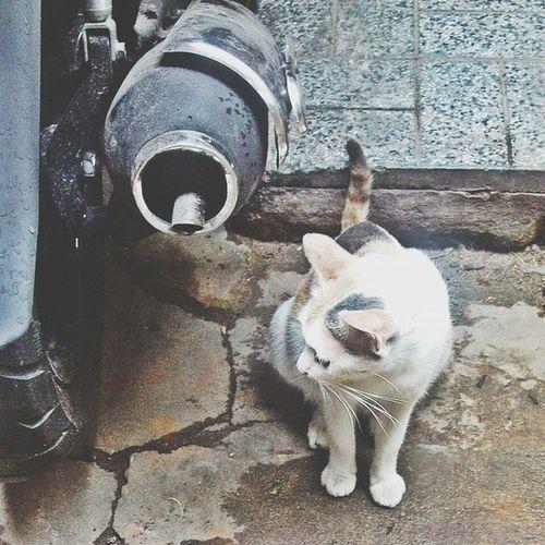 Bả là mèo mà chắc bả tưởng bả là hoa hậu. Giơ máy lên chụp cái bày đặt quay mặt đi chỗ khác. Chắc là chưa make-up mà ra đường nên ngại ống kính phóng viên đây mà! HotgirlMeoThịMèo