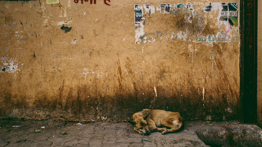 View of a dog resting
