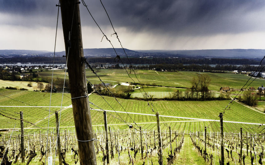 Johannesberg Rhein Rhine Vines Agriculture Barrier Beauty In Nature Boundary Cloud - Sky Day Environment Farm Fence Field Green Color Land Landscape Nature No People Outdoors Plant Plantation Rural Scene Scenics - Nature Sky Tranquil Scene Tranquility Viticulture Wine Region