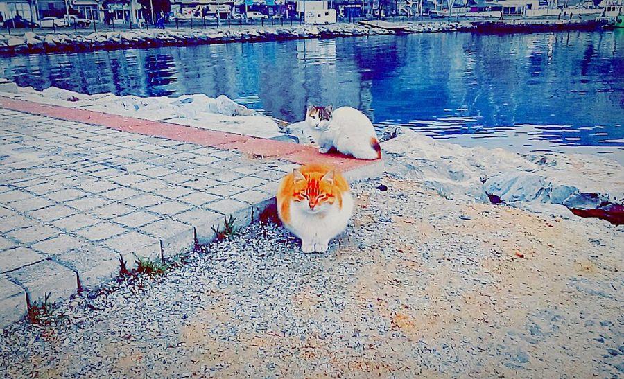Turkey Photoismylife Gemliksahil