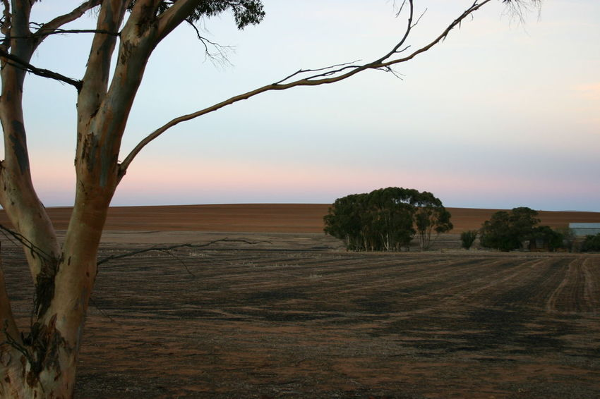Post Harvest Burnoff Beauty In Nature Branch Cropping Day Farm Growth Landscape Nature No People Outdoors Scenics Sunset Tree