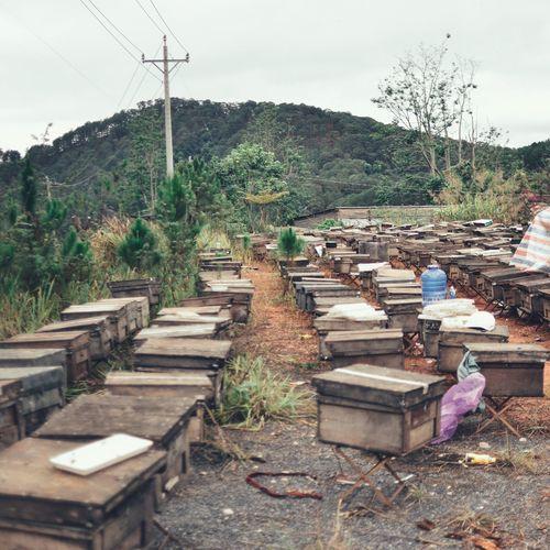 Honeyfarm Culture Vietnam