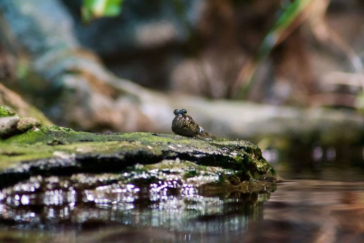 Animal One Animal Selective Focus Animal Wildlife Animal Themes Animals In The Wild Water Vertebrate No People Close-up Nature Day Amphibian Rock Reptile Rock - Object Solid Outdoors Wood - Material Animal Head