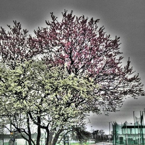 Spring Dark Sky Blossom Kirlianography