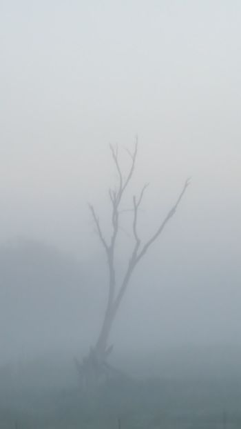 Foggy Morning Fog Fog_collection Foggy Landscape Old Tree fog in the pasture this morning quite lovely in its own way with the lone tree in the middle. Check This Out Taking Photos Good Morning Eyem And Getty Collection This Week On Eyeem Home On The Range Majestic Nature From My Point Of View Getty & Eyeem From My Porch Home Is Where The Art Is Check This Out! Android Photography Okalhoma Missouri State Line USA USA Photos No Filter, No Edit, Just Photography Atmosphere