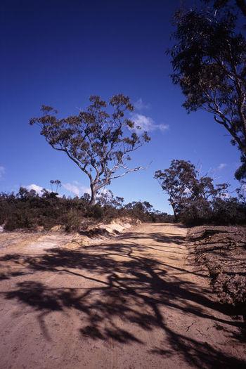 a dirt road through the australian bush Australia Australian Bush Bush Land Dirt Road Dirt Track Gum Trees Landscape Nature Nature Outdoors Road Route Scenics Track Tracks Tree Wild