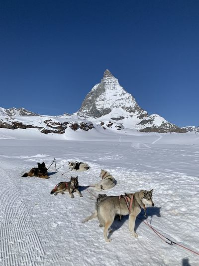 View of dog on snow covered mountain against sky