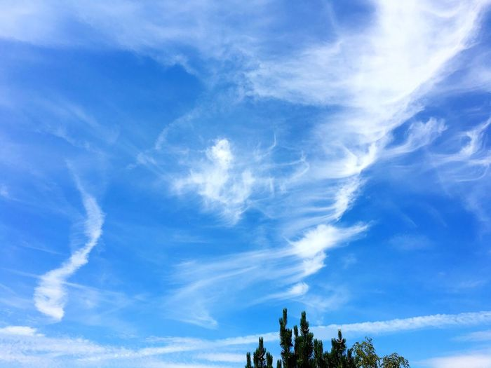 Sky Cloud - Sky Low Angle View Nature Tree Outdoors No People Beauty In Nature Scenics Day Infinity Blue Sky Blue White EyeEmNewHere