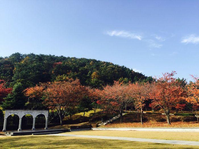 Park Fall Autumn First Eyeem Photo