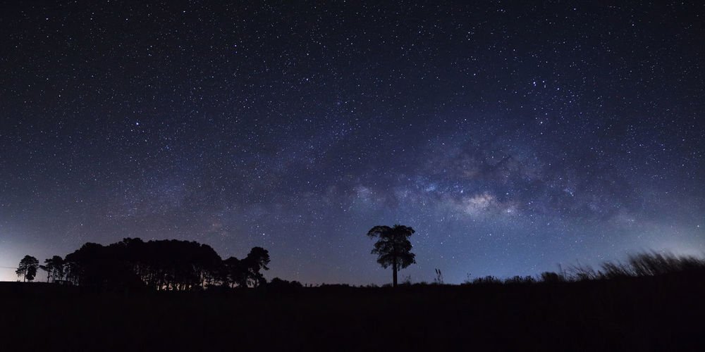 Panorama milky way and silhouette of tree at Khao Kho, Phetchabun, Thailand. Astronomy Beauty In Nature Galaxy Landscape Low Angle View Milky Way Nature Night No People Outdoors Scenics Silhouette Sky Star - Space Tranquil Scene Tranquility Tree