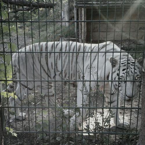 Zoo Achersleben
