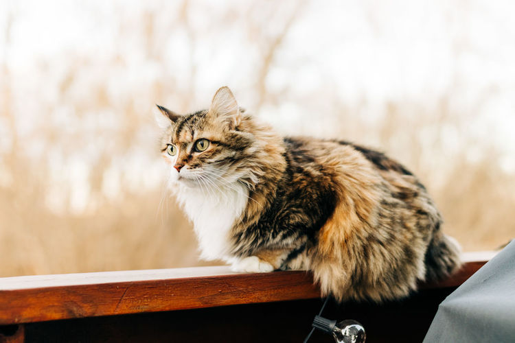 Cat sitting on looking away