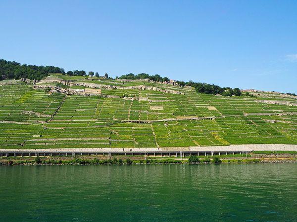 Switzerland Swiss Wine Vineyard Nature Lake Lac Léman