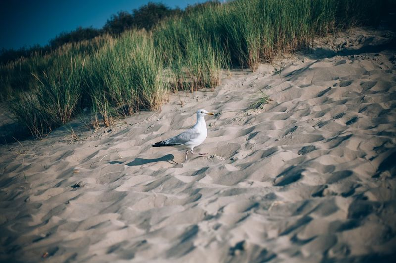 View of seagulls on beach