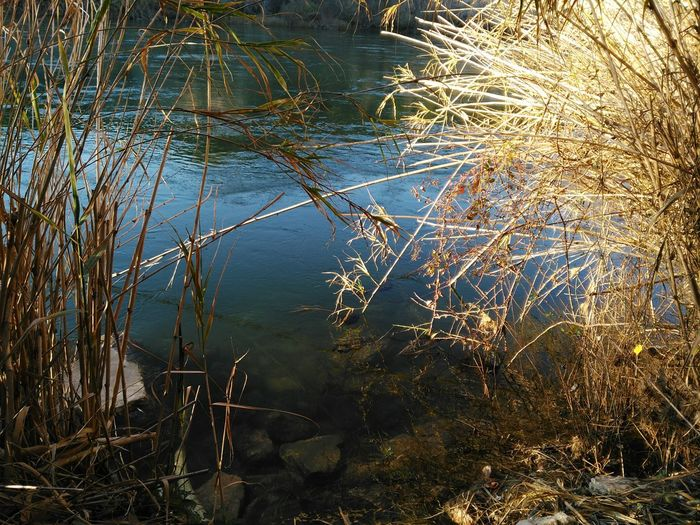 Reading Moment at Ebre River, Benifallet. Terres De L 'ebre Nature No People Outdoors Beauty In Nature Day Tranquility EyeEm Nature Lover River Catalunya Scenics Naturelovers Close-up